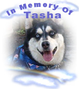 In Memory of Tasha